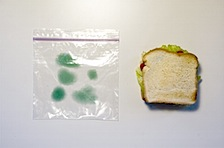 _independent_work_images_moldy_bag_1