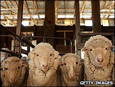 _46822280_sheep_afp226
