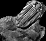 Trilobite_webepsutkedu